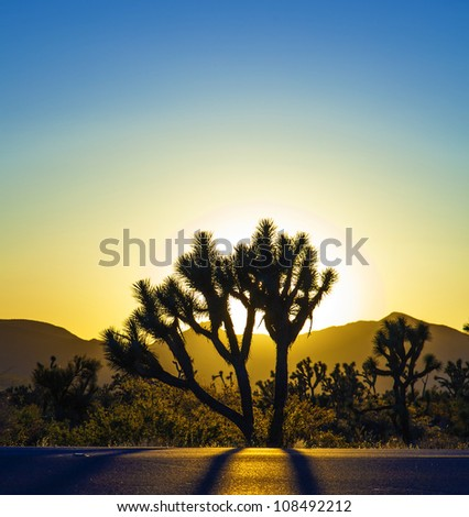 joshua trees with mountains in golden sunset - stock photo