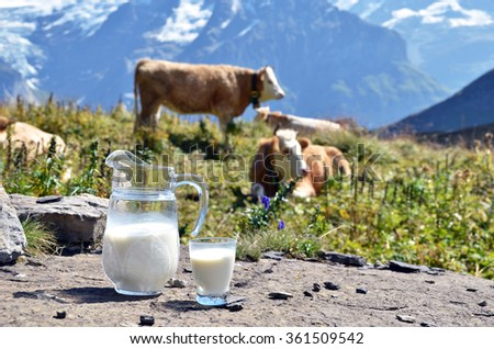 Jug of milk against herd of cows. Switzerland - stock photo