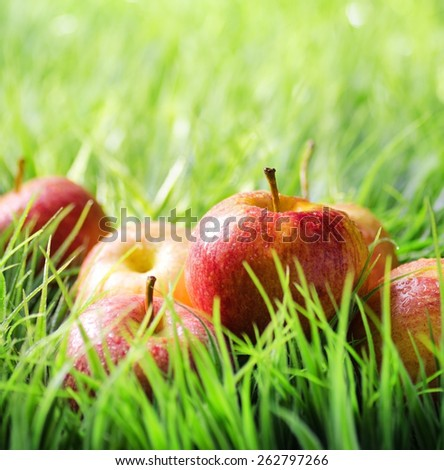 Juicy fresh red apples in drops of dew on green grass in the morning. Healthy eco food rich in minerals and vitamins. Product of organic farming. - stock photo
