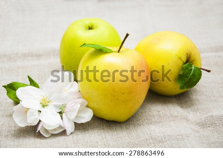 Juicy yellow apple with blossom on sack background - stock photo