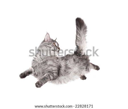 jumping cat against white background - stock photo