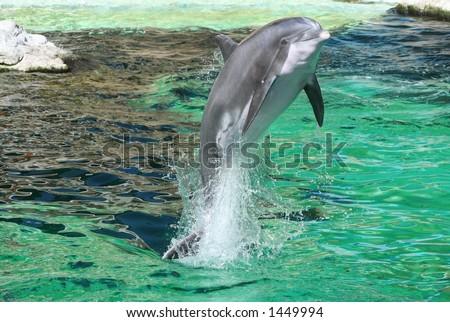 jumping dolphin - stock photo