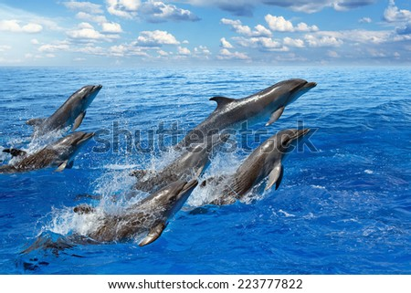 Jumping dolphins, blue sea and sky, white clouds - stock photo