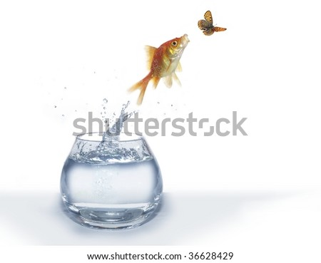 jumping out from water fish and hunting on butterfly