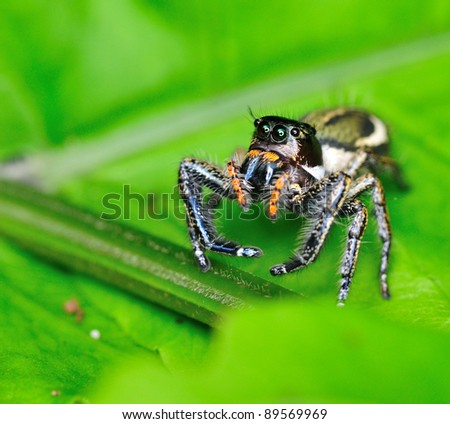 Jumping Spider. A close up of a jumping spider.