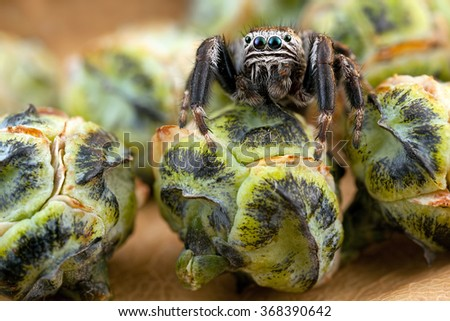 Jumping spider and buds