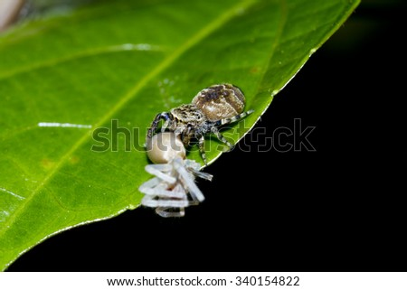 Jumping spider on the tree