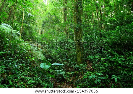 jungle - stock photo