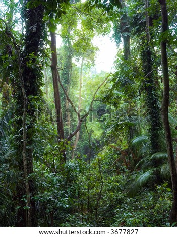 Subtropical Forest Nepal Stock Photo 140999746 Shutterstock