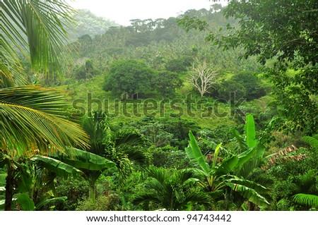 jungle at Dominican Republic - stock photo