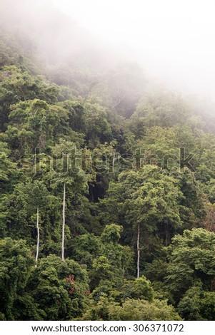 Jungle at Rhi Lake in Chin State, Myanmar (Burma) - stock photo