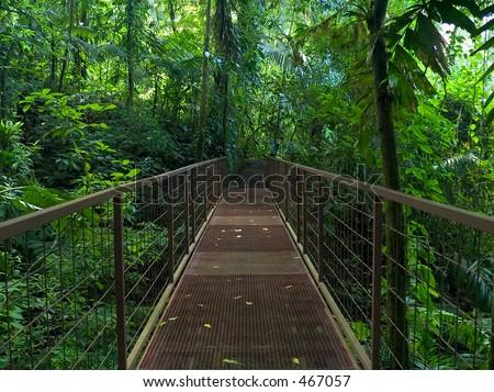 jungle bridge - stock photo