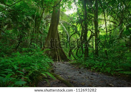 Jungle forest. Tropical trees in Asia. Beautiful adventure nature landscape background with hike road in deep rain forest of Thailand  - stock photo