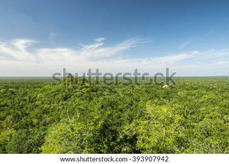 jungle from above, calakmul biosphere reserve in yucatan mexico