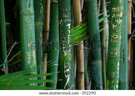 Jungle Graffiti - stock photo