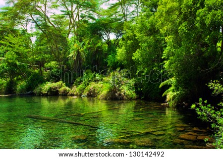 Jungle, green bush and water spring in Africa. Tsavo West, Kenya - stock photo