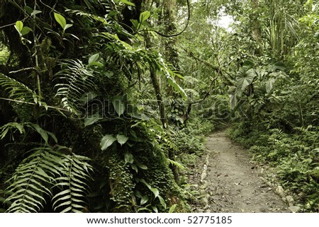 Jungle in Bolivian pre mountain tropical rain forest in Parque Carascu part of amazon basin nice green background copy space trail between evergreen trees - stock photo
