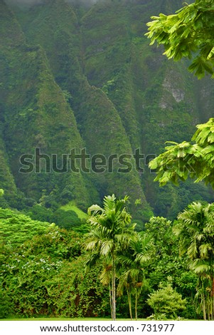 Jungle in front, mountain in the back - stock photo