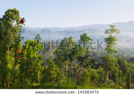 Jungle in misty morning, Sinharaja rainforest, Sri Lanka - stock photo