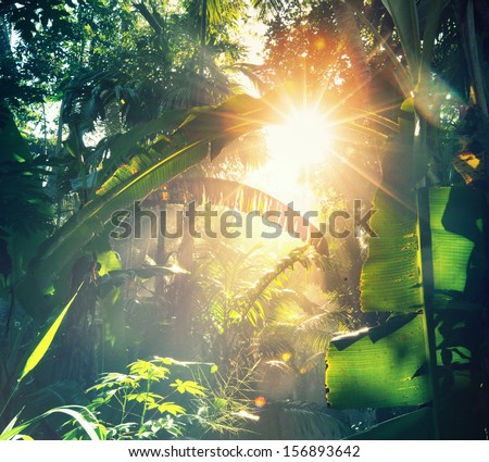 jungle in Vietnam - stock photo