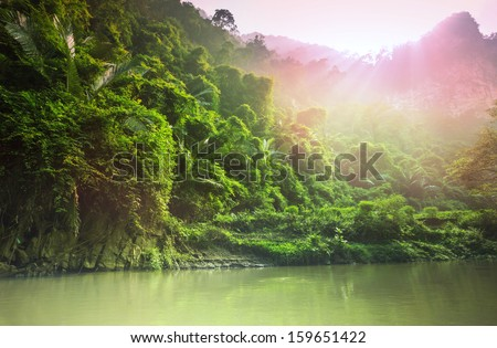 jungle in Vietnam - stock photo