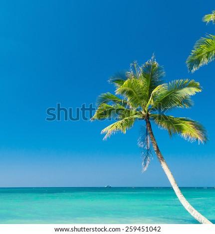 Jungle Lagoon Palm Panorama  - stock photo