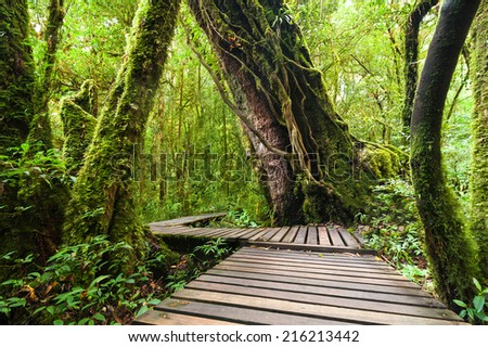 Jungle landscape. Wooden bridge at misty tropical rain forest. Travel background at Doi Inthanon Park, Thailand - stock photo