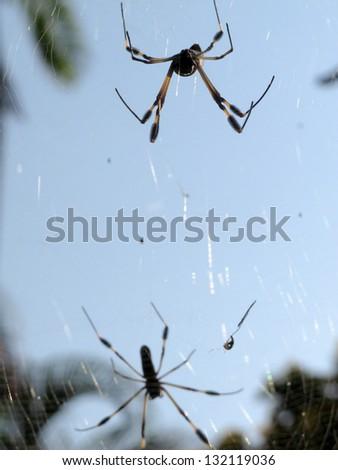 Jungle Life, Costa Rica - stock photo