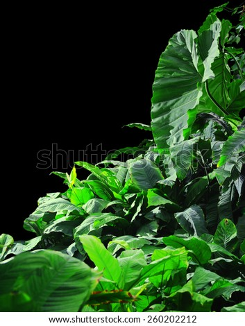 Jungle on a black background - stock photo