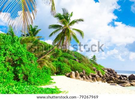 Jungle Palms Tranquility - stock photo