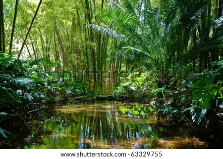 Jungle Scenery 2 - stock photo