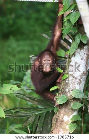 Jungle trekking in East Borneo - stock photo