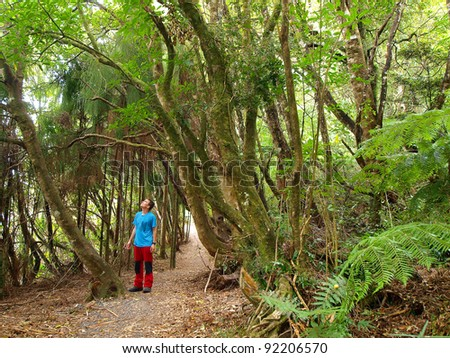 Jungle walk in tropical New Zealand forest