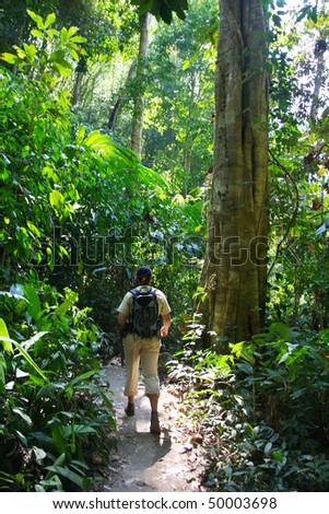 Jungles - stock photo