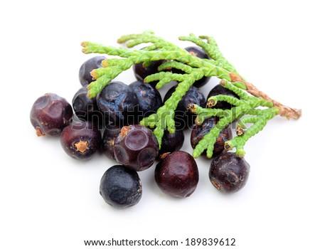 Juniper berries isolated on white - stock photo