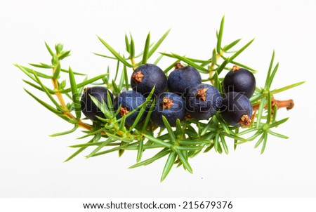 Juniper berries isolated on white - stock photo