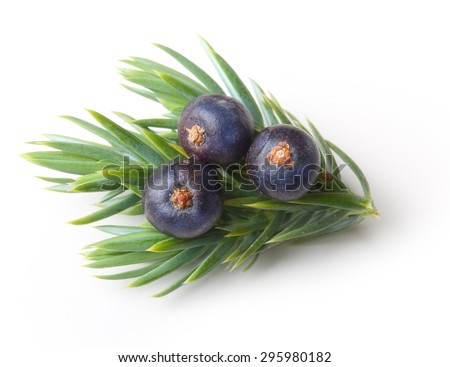 Juniper berries isolated on white background. - stock photo