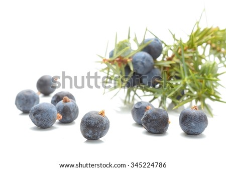 Juniper berries isolated on white background - stock photo