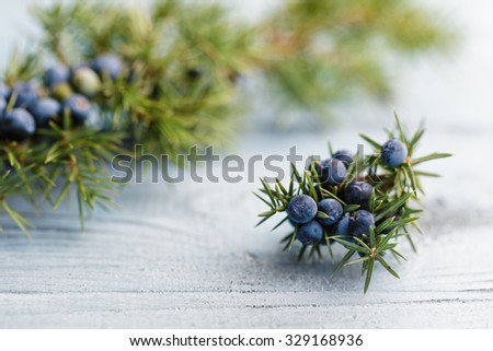 Juniper branch with berries - stock photo