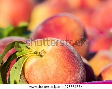 Just harvested peaches at local farm market. - stock photo