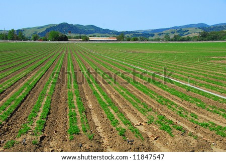 Just Planted Crop - stock photo