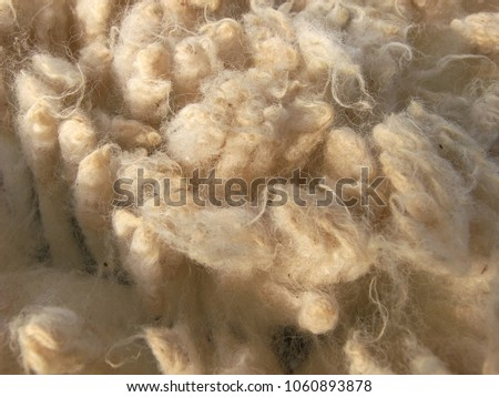 Just shorn wool from different colored sheep