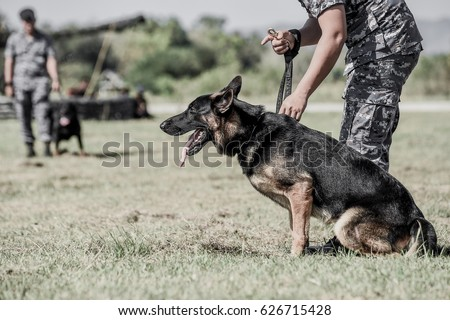Cool German Shepherds Army Adorable Dog - stock-photo-k-military-dog-k-portrait-of-angry-gray-working-line-german-shepherd-barking-soldiers-from-626715428  Perfect Image Reference_6952  .jpg