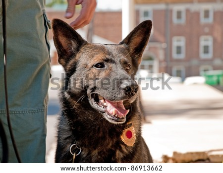 K9 officer next to his handler in an urban environment - stock photo