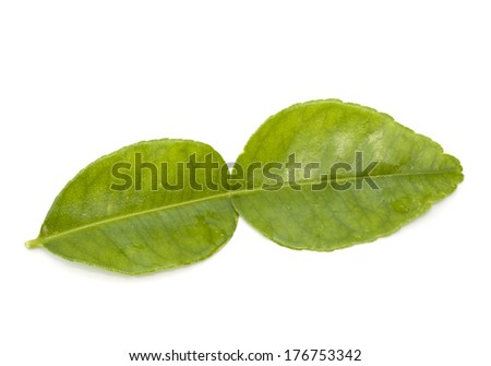 Kaffir lime leaf isolated on the white background - stock photo