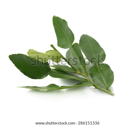 Kaffir lime leaf isolated on white background
