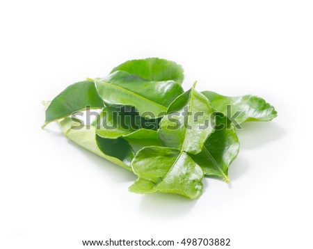Kaffir lime leaves isolated