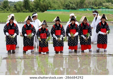 KAGAWA, JAPAN, JUNE 7: Japanese young girls plants a plant of rice in a rice paddy. The holy festival to pray for a good harvest, on June 7, 2015 in Kagawa, Japan  - stock photo