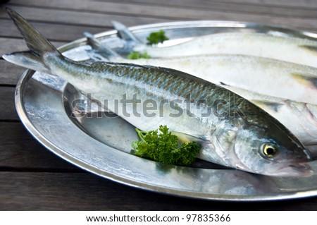 Kahawai sea water fish caught in New Zealand - stock photo