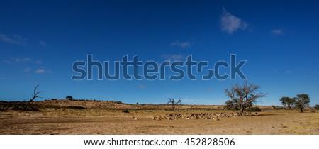Kalahari landscape - stock photo